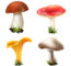 $ Categories Of Mushrooms
