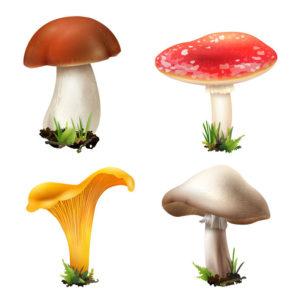 4 Categories Of Mushrooms