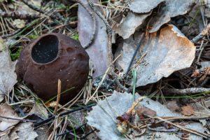 Common Poisonous Mushrooms