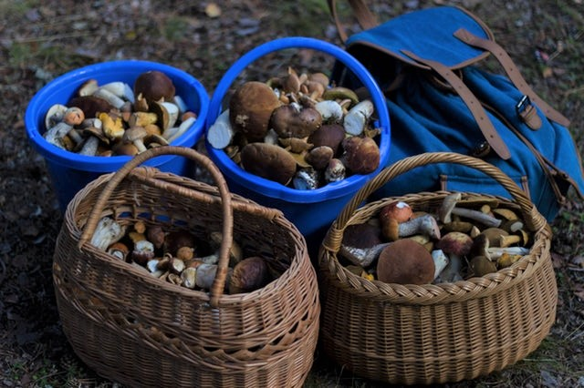 Foraging For Mushrooms (and Staying Alive)